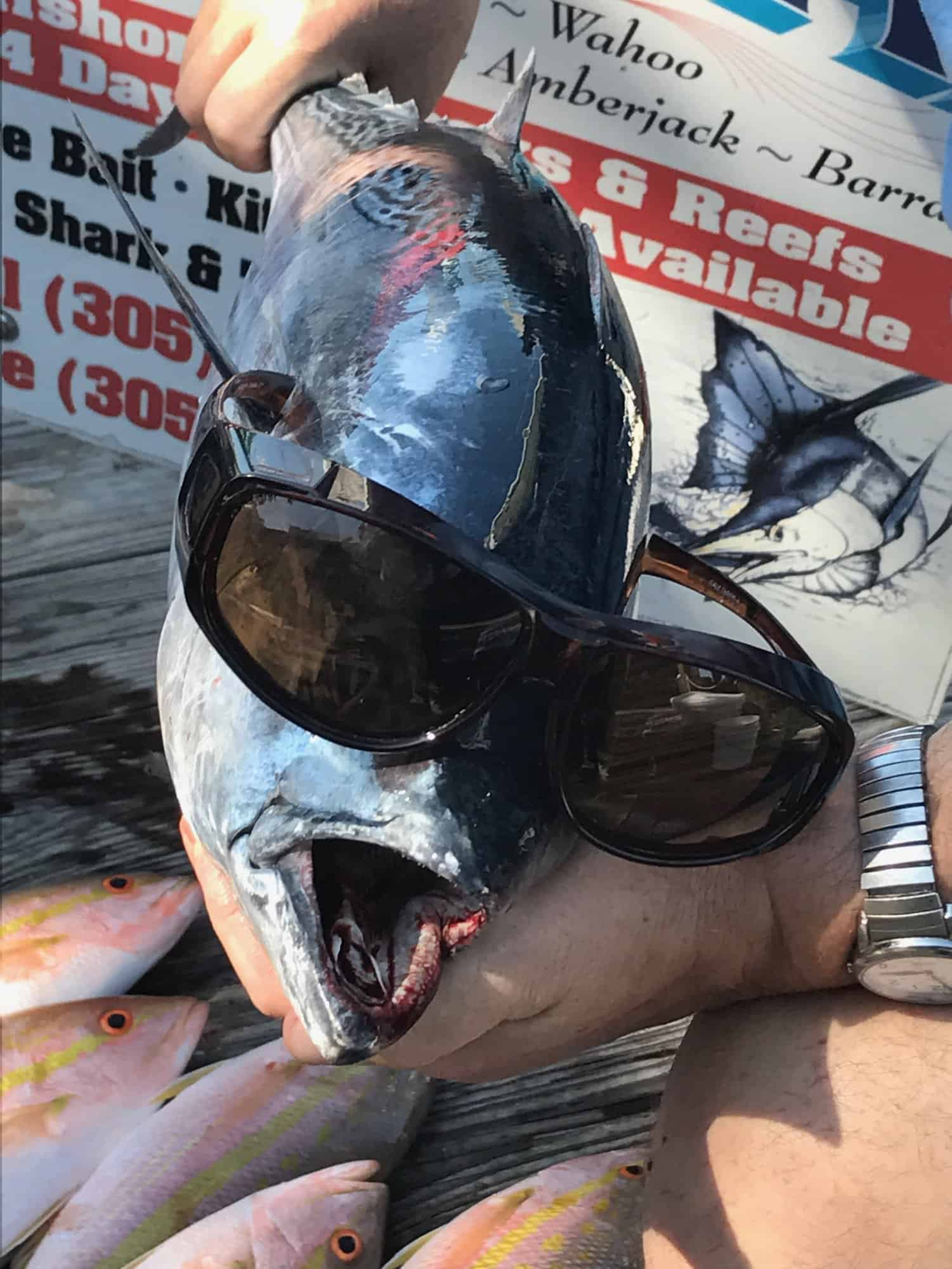 Cool Fish Too Lethal Charters
