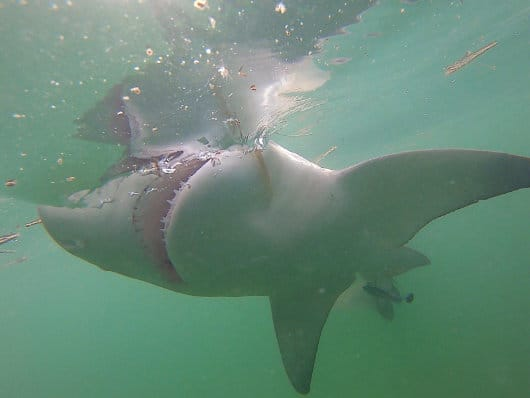 Shark Too Lethal Charters